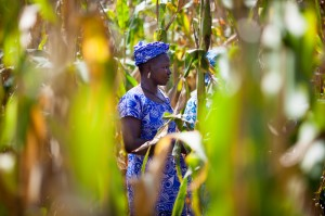 Ebou Dango, a farmer in Didyr, Burkina Faso, participates in a program supported by MCC through partner Office of Development of Evangelical Churches to help women farmers adapt to climate change through conservation agriculture practices, seed production and off season vegetable production.