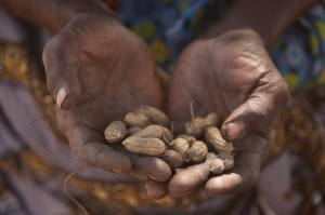 Dekoundam Louise shares peanuts grow by the Bedai village women's group. MCC photo/Silas Crews